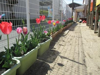 ひがし保育園 ひがしKIDSブログ ひがし保育園の園庭